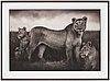 "Nick brandt, ""lion family portrait, masai mara"", 2004"