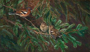 426. Bruno Liljefors, Common chaffinch feeding nestlings.