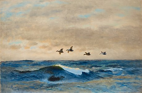 Bruno liljefors, common eiders.