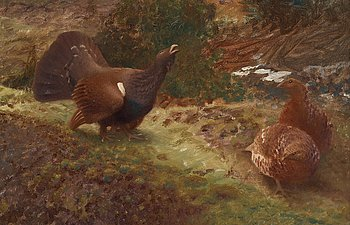 522. Bruno Liljefors, Western capercaillies courting.