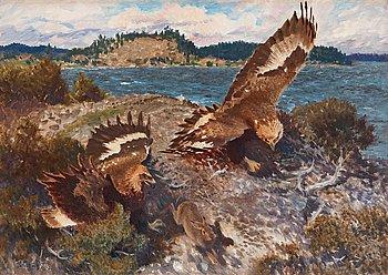 521. Bruno Liljefors, Eagles chasing a hare.