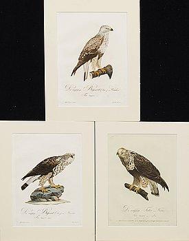 "PLANSCHER, kopparstick, 3 st, Ur Teutsche Ornithologie..."" 1800-1817, gravör Johann Conrad Susemihl."
