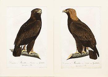 "PLANSCHER, kopparstick, 2 st, Ur Teutsche Ornithologie..."" 1800-1817, gravör Johann Conrad Susemihl."