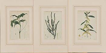 """H.C. ANDREWS, hand colored  copper engravings, 3 pcs , from """"Encylopedia Londinensis"""" 1802."""