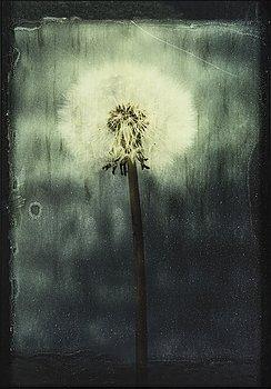 EWA-MARIE RUNDQUIST, photograph, numbered 1/3.