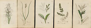 "UR ""ENGLISH BOTANY"" 3:e upplagan, vol VII, 1854 172 st handkolorerade kopparstick. London."