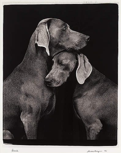 William wegman, photograph, signed and dated -09.