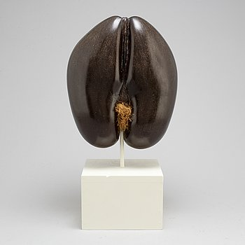 A double coconut, Coco de Mer,  Lodoicea maldivica.