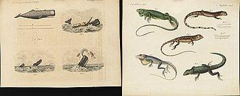 FRIEDRICH JOHANN JUSTIN BERTUCH, 20 hand colored copper engravings from 'Bilderbuch für Kinder' 1790-1830.