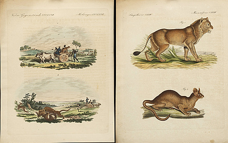 Friedrich johann justin bertuch, 20 hand colored copper engravings from 'bilderbuch für kinder' 1790-1830.