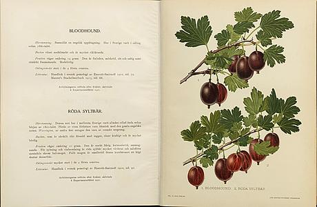 """""""svensk frukt"""" by gustaf lind, stockholm 1920 24"""
