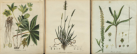Friedrich hayne - book, 38 hand colored copper engravings, dated 1794-1805.