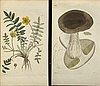 "50 botanical copper engravings from palmstruch's ""svensk botanik""  1804/1808."