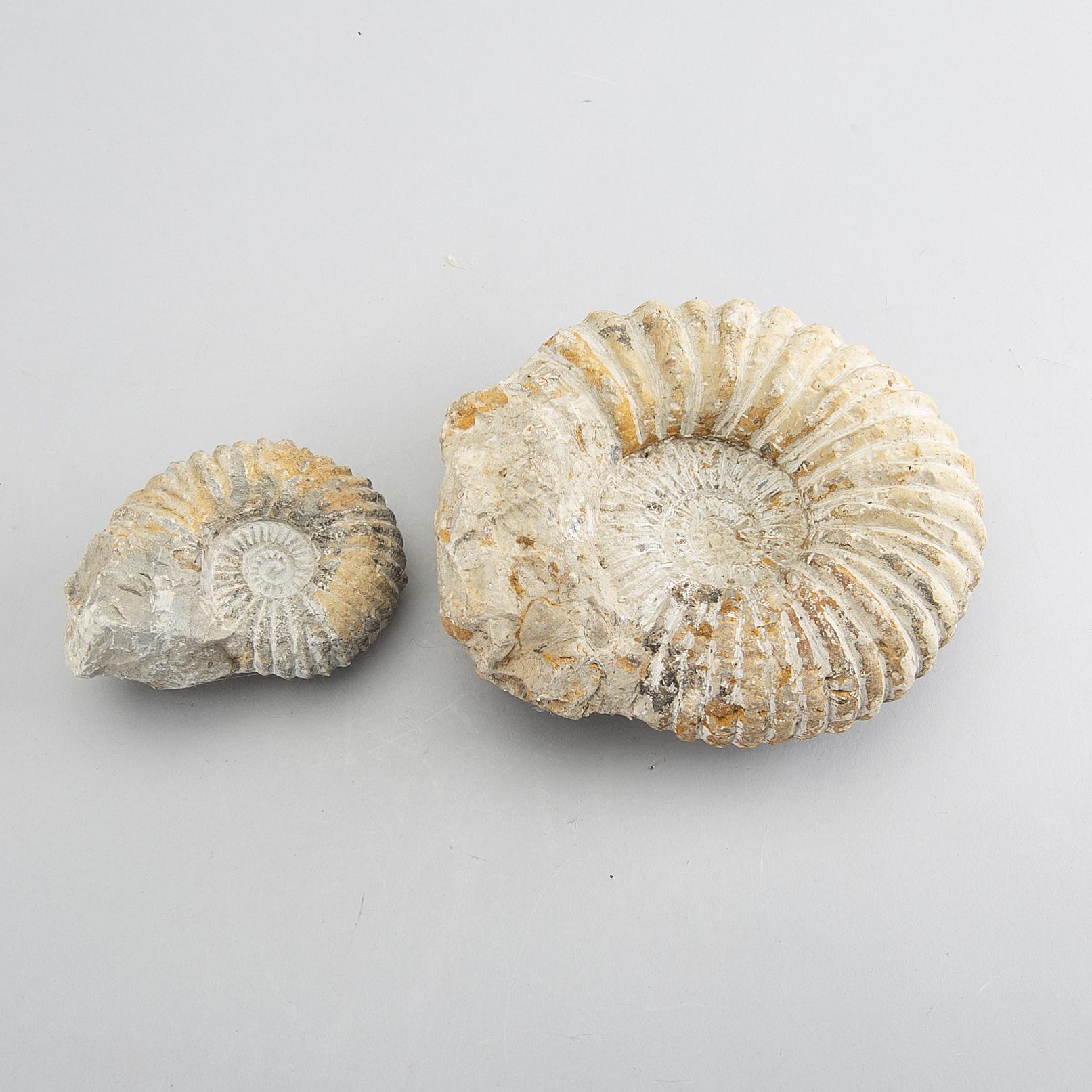 fossiler att köpa
