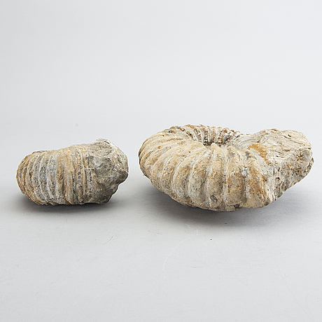 Two fossils.