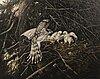 Teppo terÄ, female hawk with nestlings.