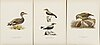 "Litographs, 112 pcs from m and w von wrights ""svenska fåglar"" i & ii, a. börtzells, stockholm,"