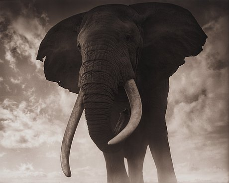 "Nick brandt, ""elephant against sky, amboseli 2011""."
