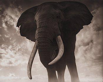 "150. Nick Brandt, ""Elephant Against Sky, Amboseli 2011""."