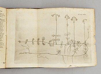 Med graverad plansch föreställande en linnea, 1745.