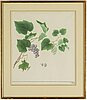 Four chinese water colours, 20th century.