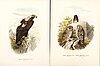 Otto von riesenthal after, birds, 29 litographs, 1894.