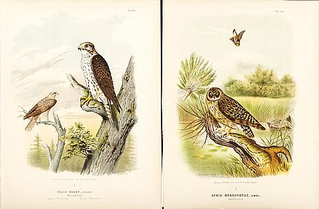 Otto von riesenthal efter, fåglar, 29 litografier, 1894.