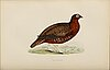 'a history of british birds, rev f o morris, 1891, 102 hand colored engravings / etchings.