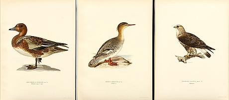"""Litografiska tryck, 109 st ur m och w von wrights """"svenska fåglar"""" volym ii samtliga, a börtzells, stockholm 1929."""