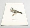 """Litografier ur """"svenska fåglar"""" alla 109 st, m och w von wrights, vol iii, a börtzells, stockholm."""