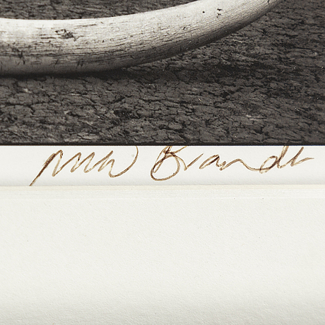 Nick brandt, photograph signed.