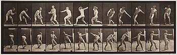 "320. Eadweard Muybridge, Plate 284 from ""Animal Locomotion"", 1887."