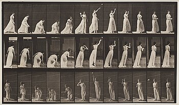 "321. Eadweard Muybridge, Plate 305 from ""Animal Locomotion"", 1887."