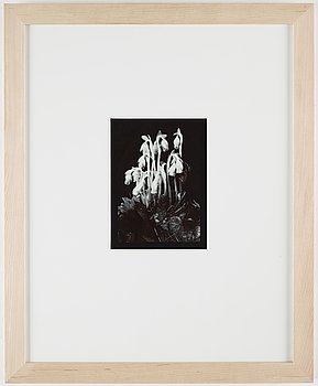 Olivia Parker, photograph signed on verso ed 18.