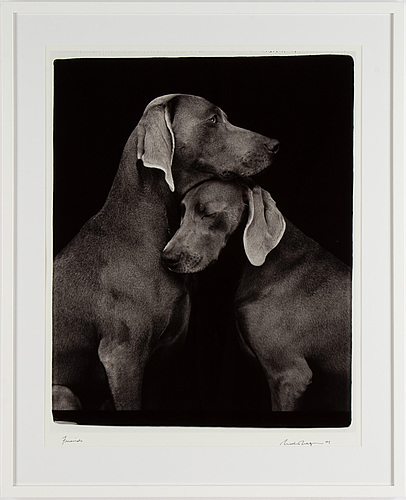William wegman, photograph, signed and dated -05.