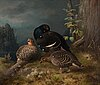 Ferdinand von wright, black grouses at a pinetree.