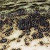 Kati tuominen-niittylä, malja keramiikkaa signeerattu ktn.