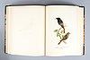 3 vol. von wright, m,w & f: svenska fåglar. stockholm 1924-29.