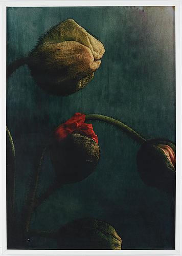 Ewa-marie rundquist, photograph edition 1/1.