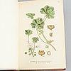 """Böcker, """"bilder ur nordens flora"""", c.a.m lindman, wahlström & widstrand, stockholm, 1922-26."""