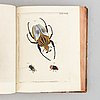 Beautiful hand-coloured engraved plates of beetles.