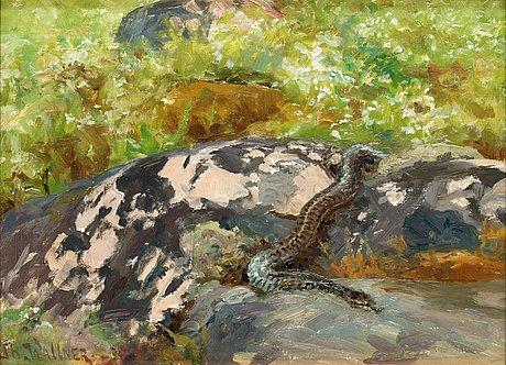Thure wallner, smooth snake (coronella austriaca).