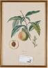 Tryck, 5 st. frankrike, 1800/1900-tal.
