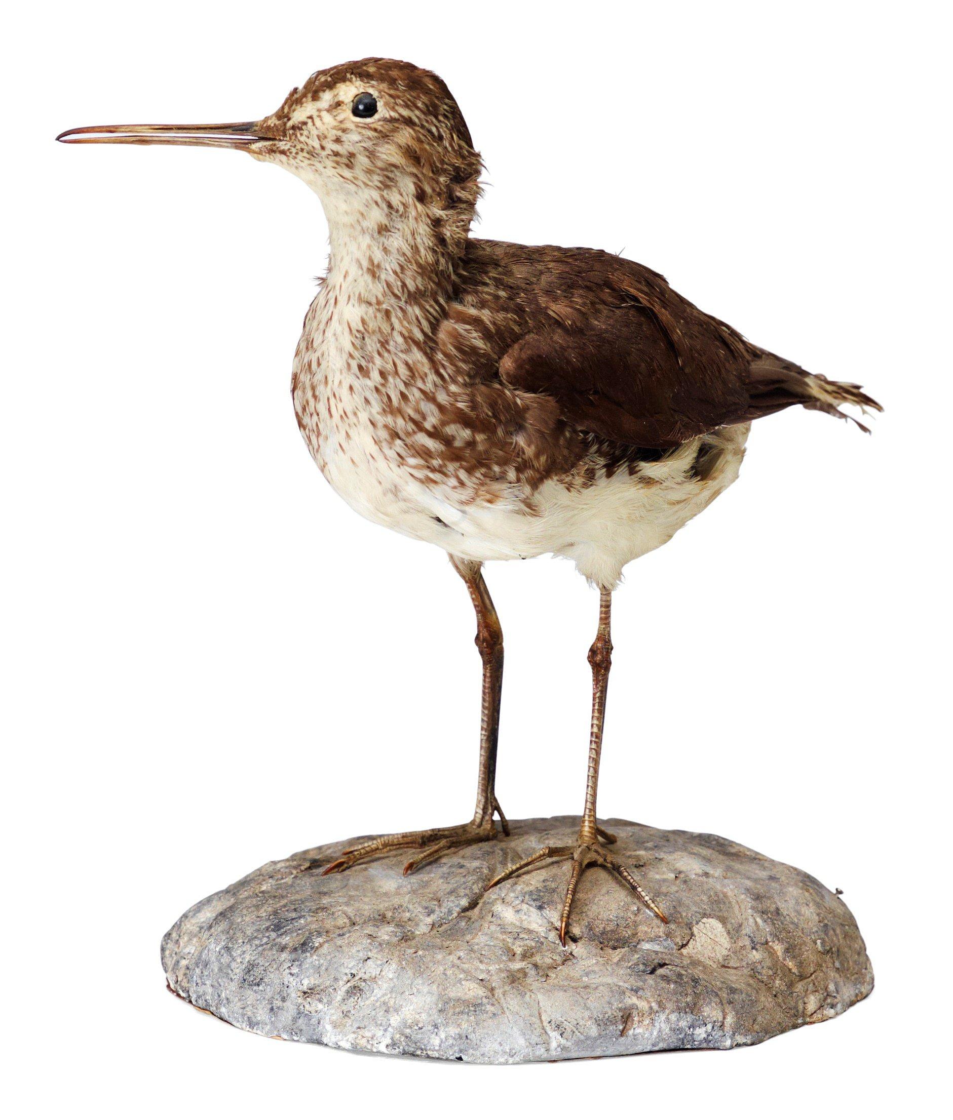 Uppstoppade fåglar auktioner