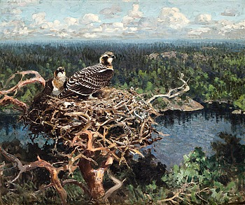 21. THURE WALLNER, Osprey in nest.