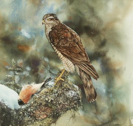 """Bo lundwall, """"sparvhök"""" (sparrowhawk)."""