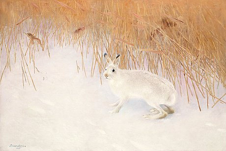 Bruno liljefors, hare in a winter landscape.