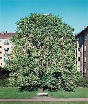"""209. David Svensson, """"Tankar i det gröna"""", 2001."""