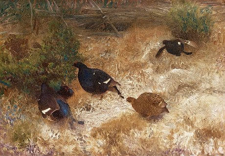 Bruno liljefors, black grouse.