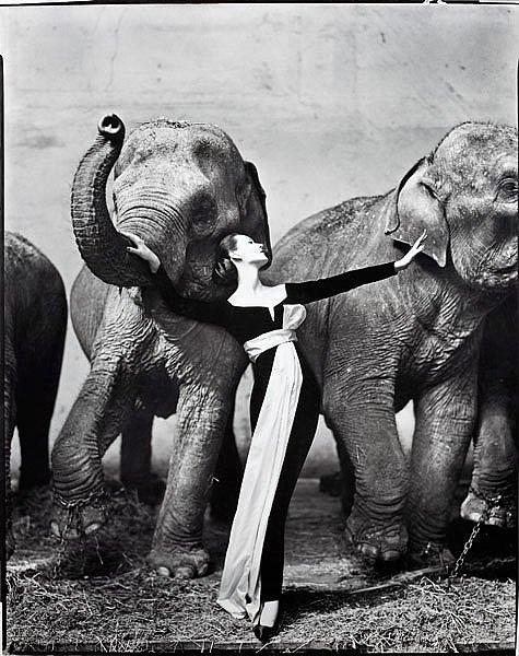 Ричард аведон фотографии работа в сибае для девушек